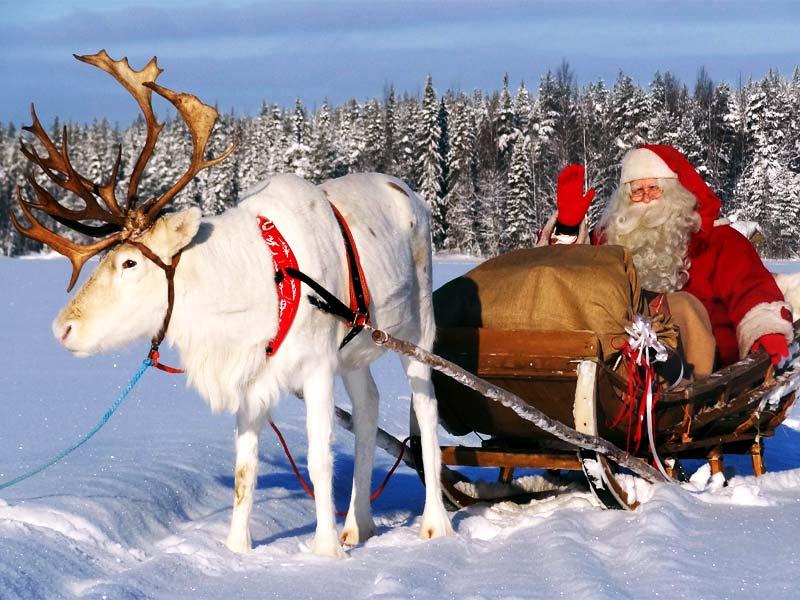 Дед Мороз в Финляндии: олень Рудольф – главный помощник Йоулупукки