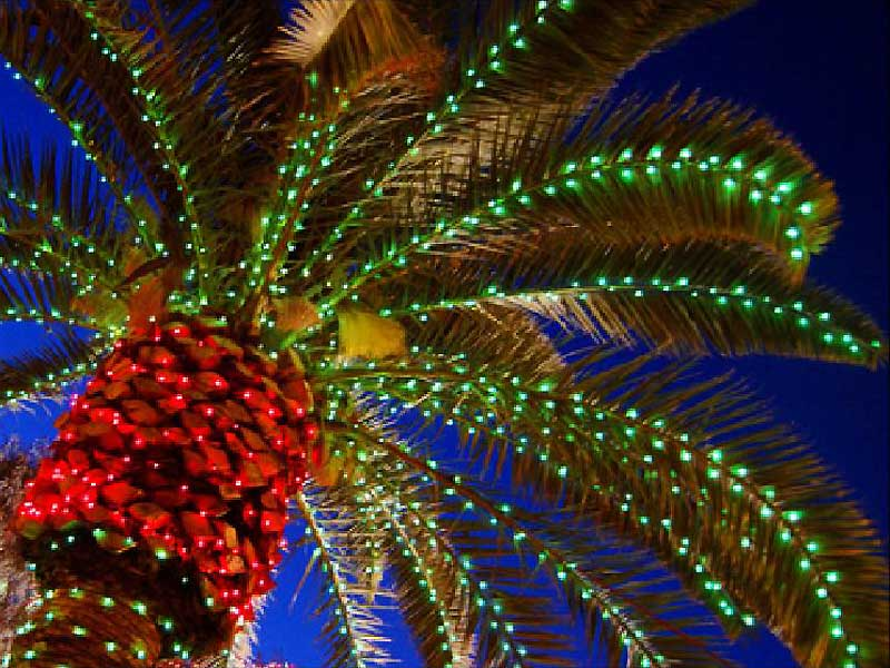 Почему на Новый год наряжают елку: новогодняя пальма в ЕГипте
