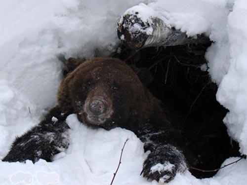 Медведь выберется из берлоги на Пушкинской набережной