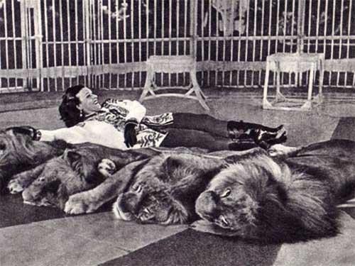 Image result for укротительница тигров