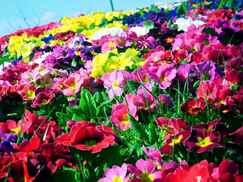 картинки цветов разных