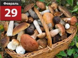 Можно ли собирать грибы в високосный год?