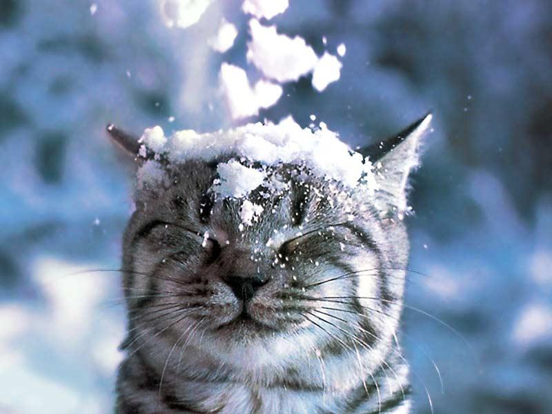 Картинки про снег первый